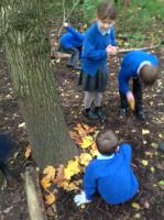 Aut 1: Creating natural sculptures in the style of Andy Goldsworthy in the Wild Garden.