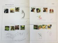 Spr 1: To sort and classify to own criteria. To identify animals from a rainforest habitat.