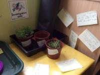 Sum 1: Asking our own questions about plant growth.
