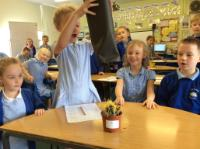 Sum 1: Investigating the conditions for plant growth - no light, plant yellow and tall.