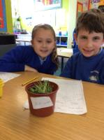 Sum 1:  Investigating the conditions for plant growth - no water, grew a little as initial soil was damp.