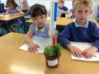 Sum 1: Investigating the conditions for plant growth - soil, water and light, plant 7cm tall and very green.